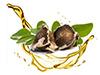 Moringa-Seed-Oil image
